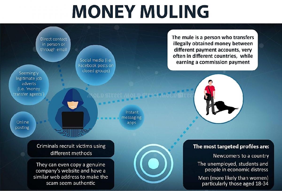 schemă de a face bani pe internet cu contribuția fondurilor)